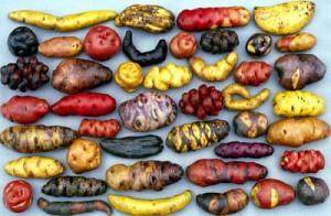 potatoes-300x196